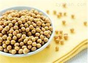 大豆膳食纤维 大豆纤维素 调节肠胃 功能性食品原料