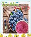 蓝莓提取物Bilberry Extract,蓝莓花青素,花色甙