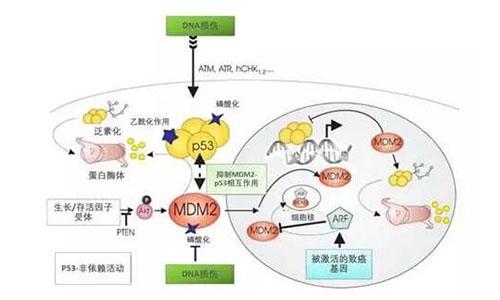 亚盛医药抗肿瘤1类新药获批进入中国临床